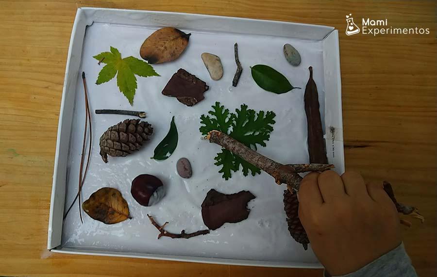 Arte otoño con elementos naturales en tapa de caja zapatos