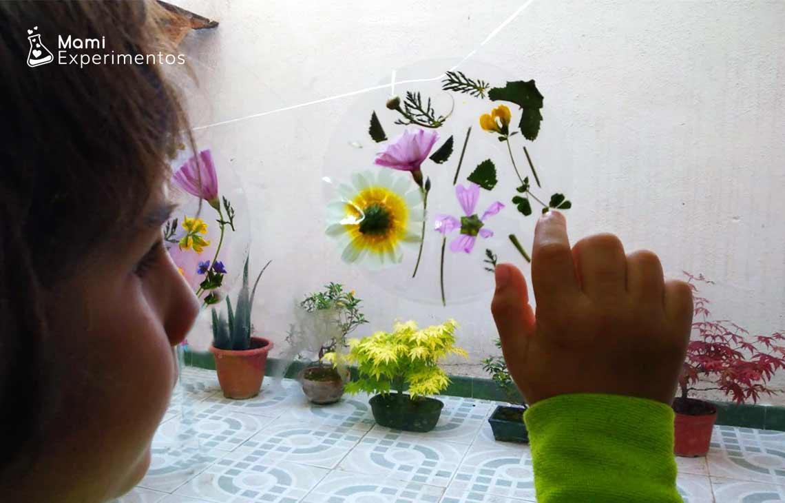 Actividad sensorial crear atrapasol con flores reales