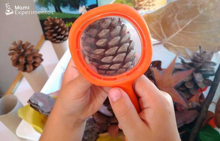 Caja sensorial de otoño