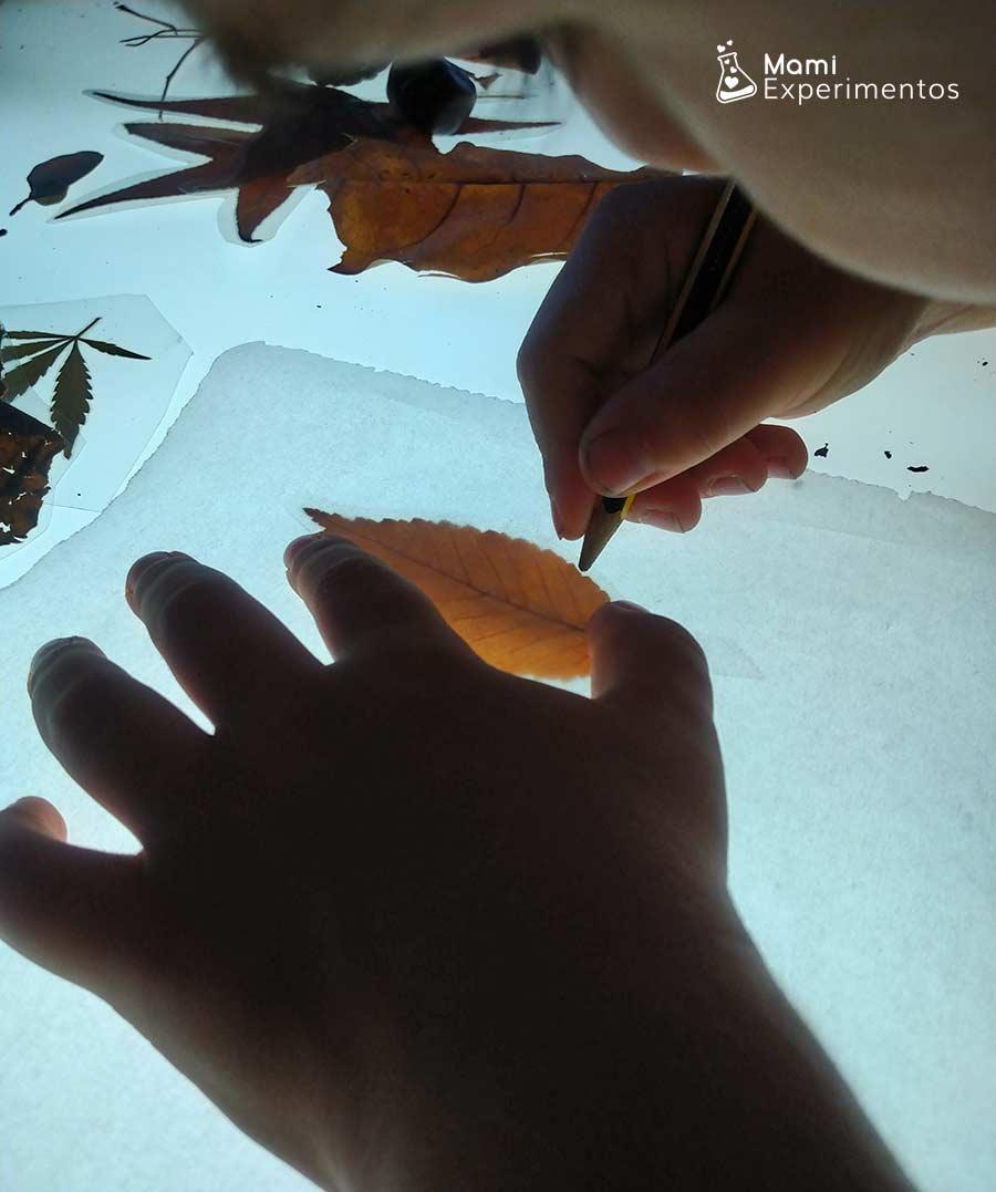 Calcando en papel de horno hoja de otoño en mesa de luz