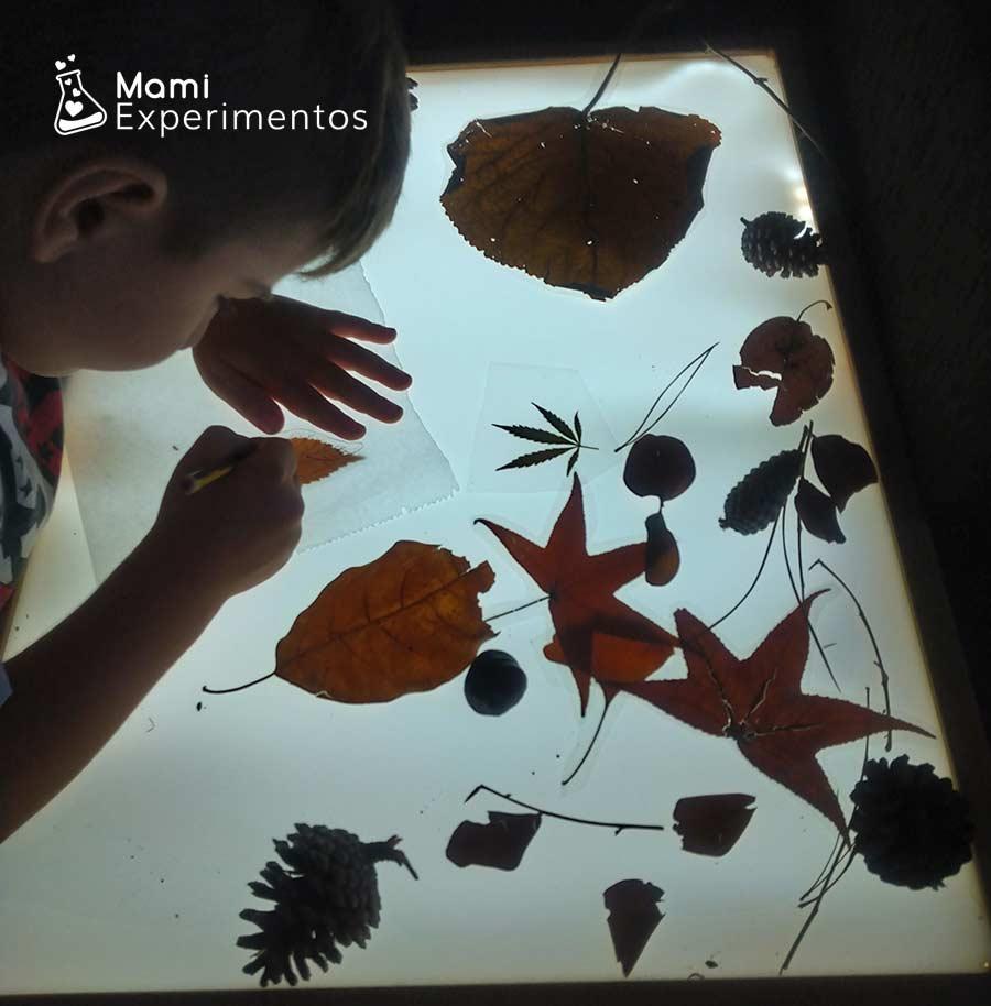 Dibujando hoja de otoño en papel de horno y mesa de luz