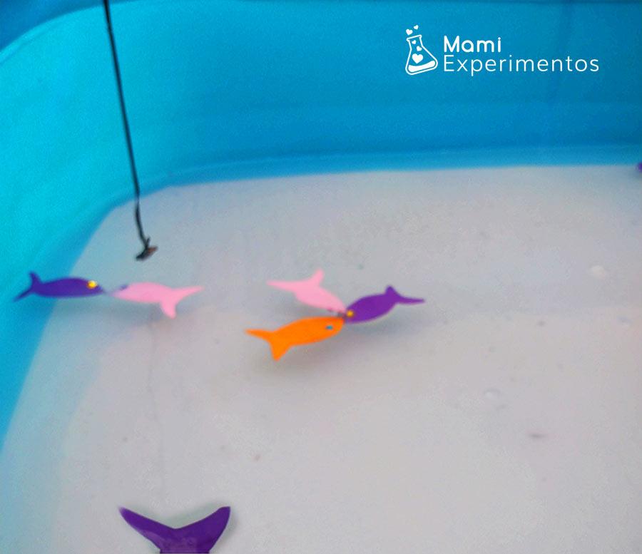 Caña con iman para pescar peces de colores