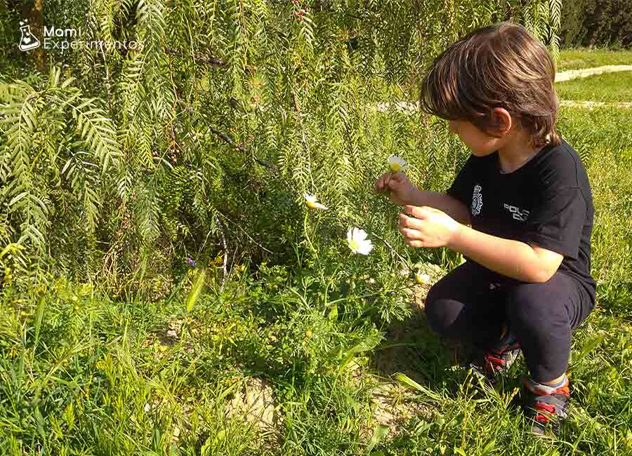 Cogiendo flores para slime flower power