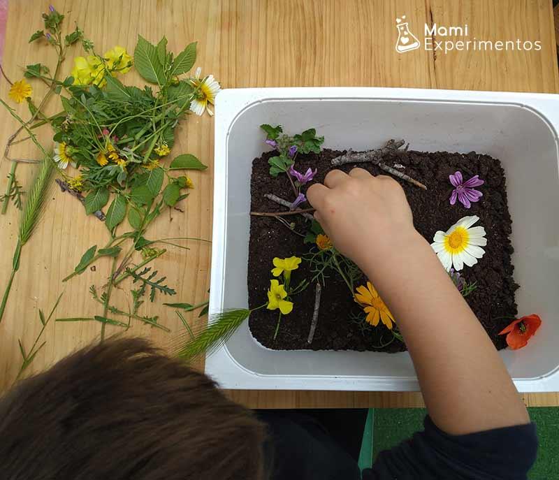 colocando flores en caja sensorial primavera
