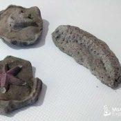 Cómo crear tus propios fósiles caseros