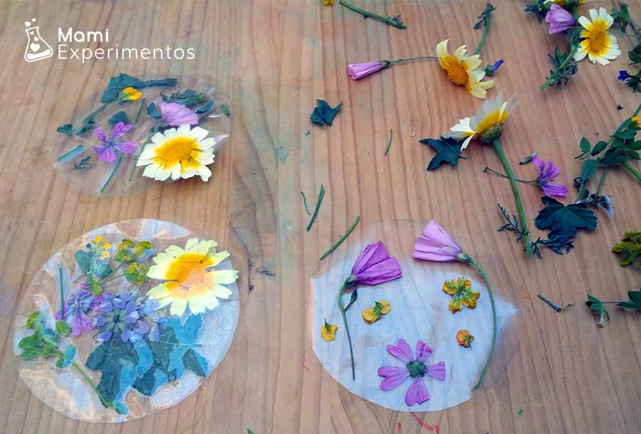 Creaciones artísticas en atrapasol de flores