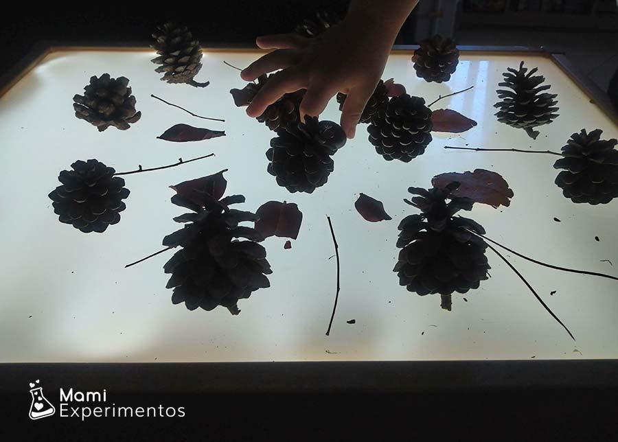 Creando mandala de otoño en mesa de luz
