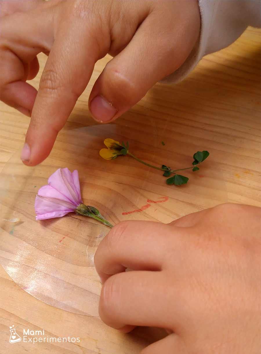 Crear atrapasol de primavera con flores reales