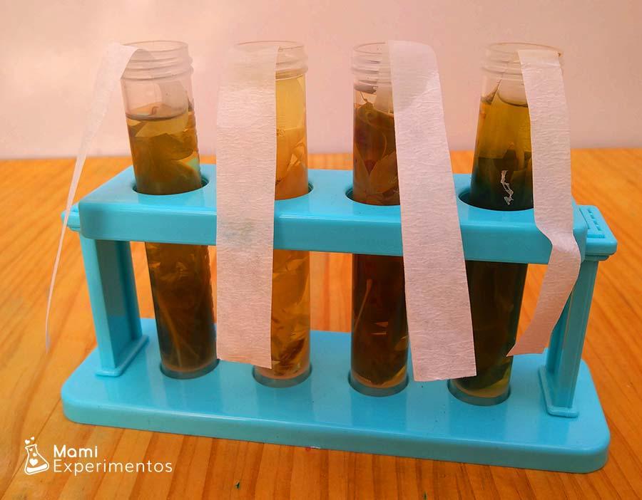 Cromatografía con papel de filtro y hojas de otoño