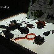 Descubrir el otoño con la mesa de luz