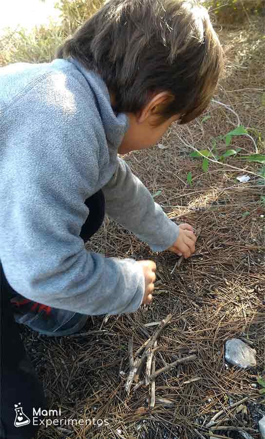 Eligiendo ramas y palos para árbol de invierno artístico