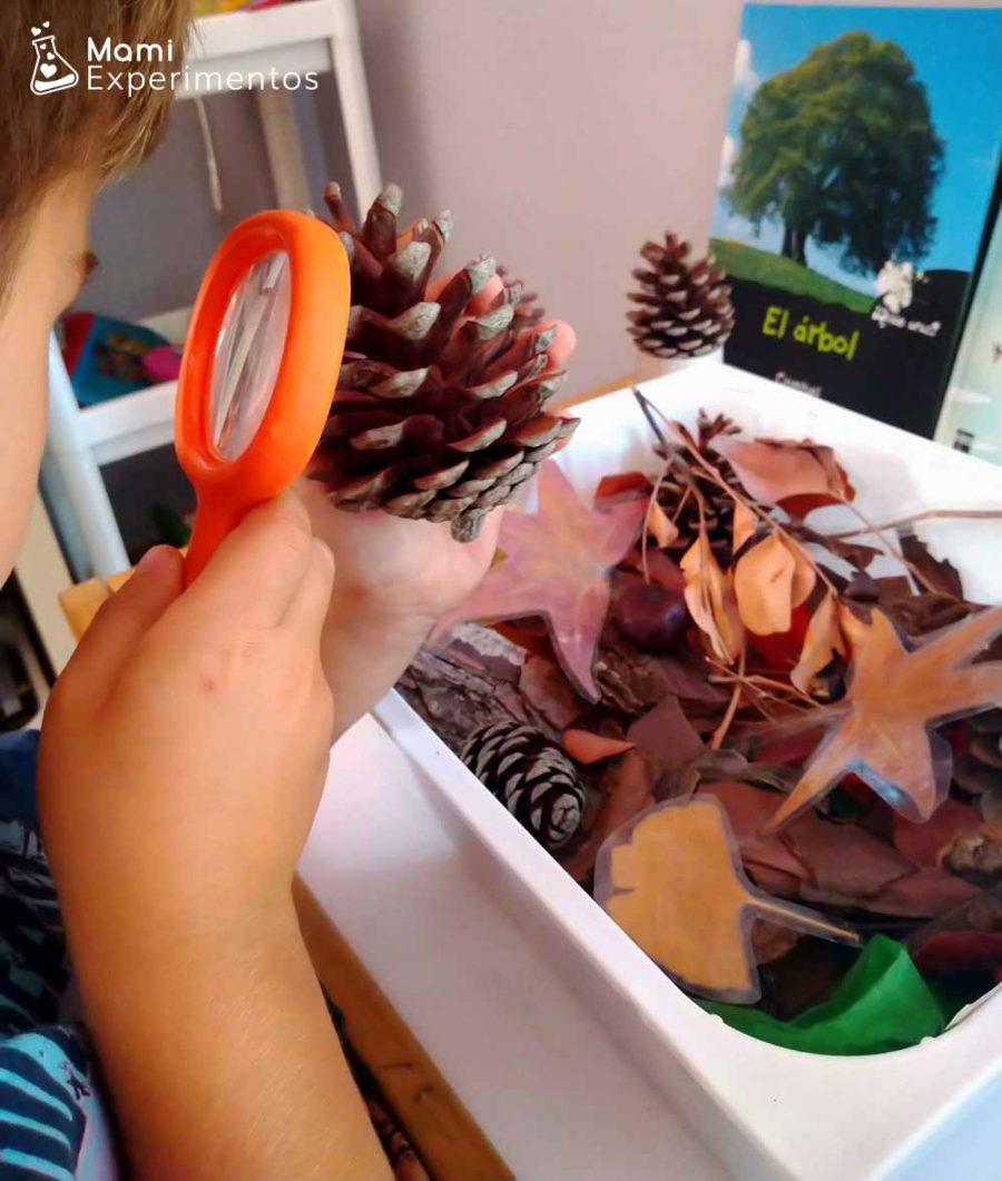 Experimentando nuestra caja sensorial de otoño con la lupa