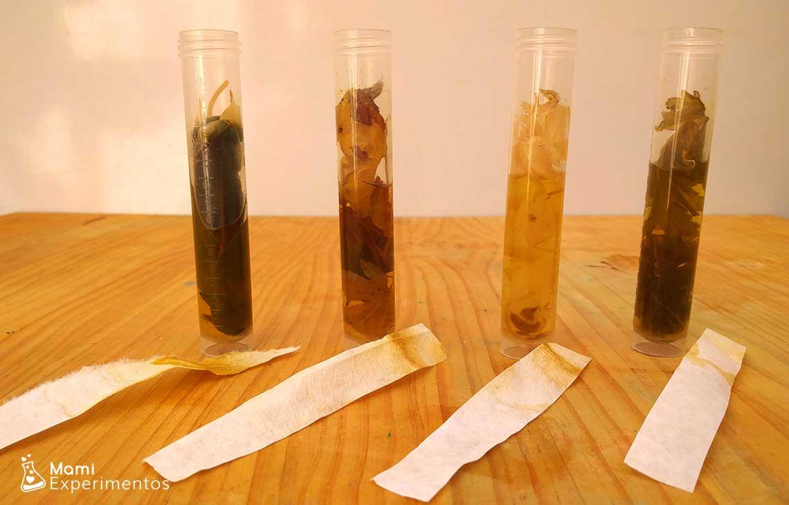 Cromatografía de hojas de otoño