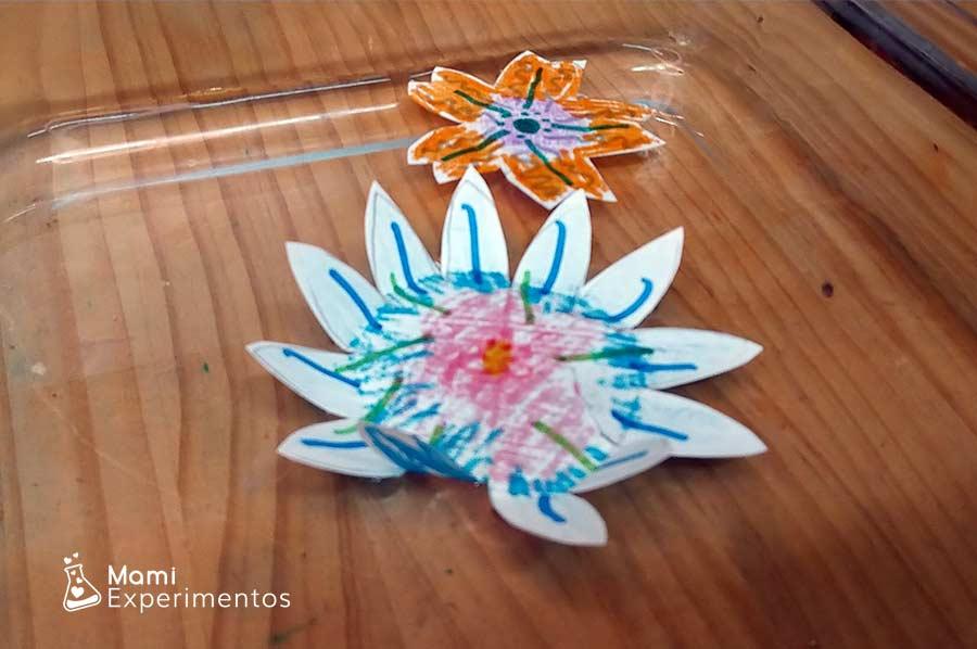 Experimento flores que se abren en contacto con agua