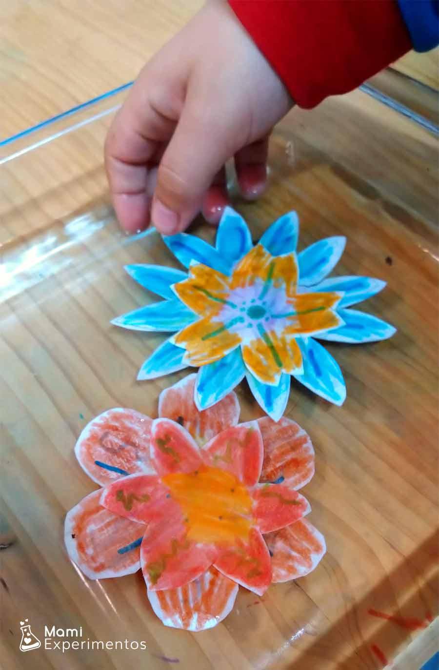 Flores de colores experimento capilaridad flores que se abren