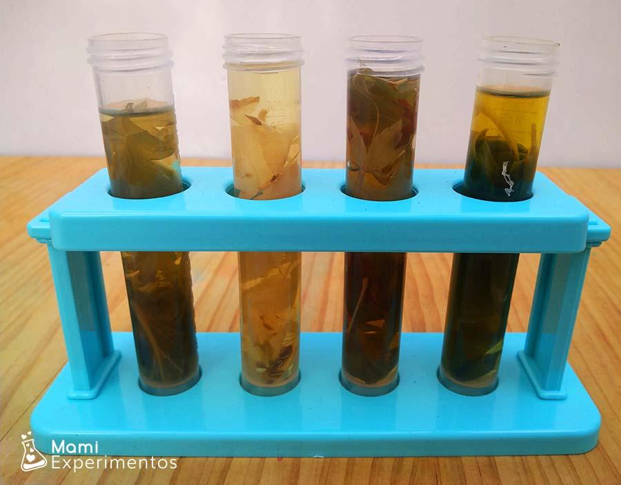 HOjas cubiertas de alcohol experimento cromatografía