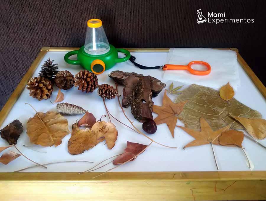 Materiales necesarios para aprender sobre el otoño en la mesa de luz