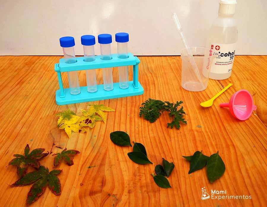 Materiales necesarios para experimento cromatografía con hojas