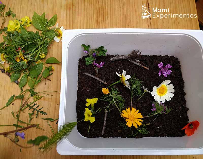 Montar caja sensorial primavera
