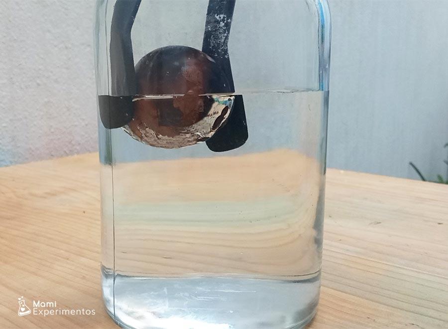 Observando huevo dentro del agua se ha vuelto plateado