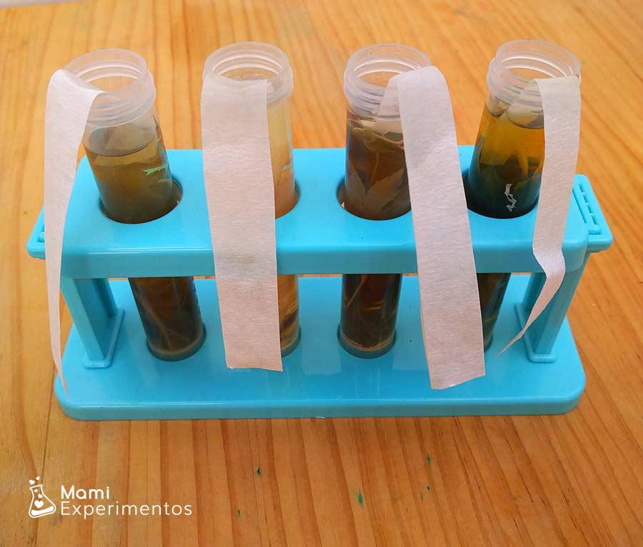 Papel de filtro proceso cromatografía hojas de otoño