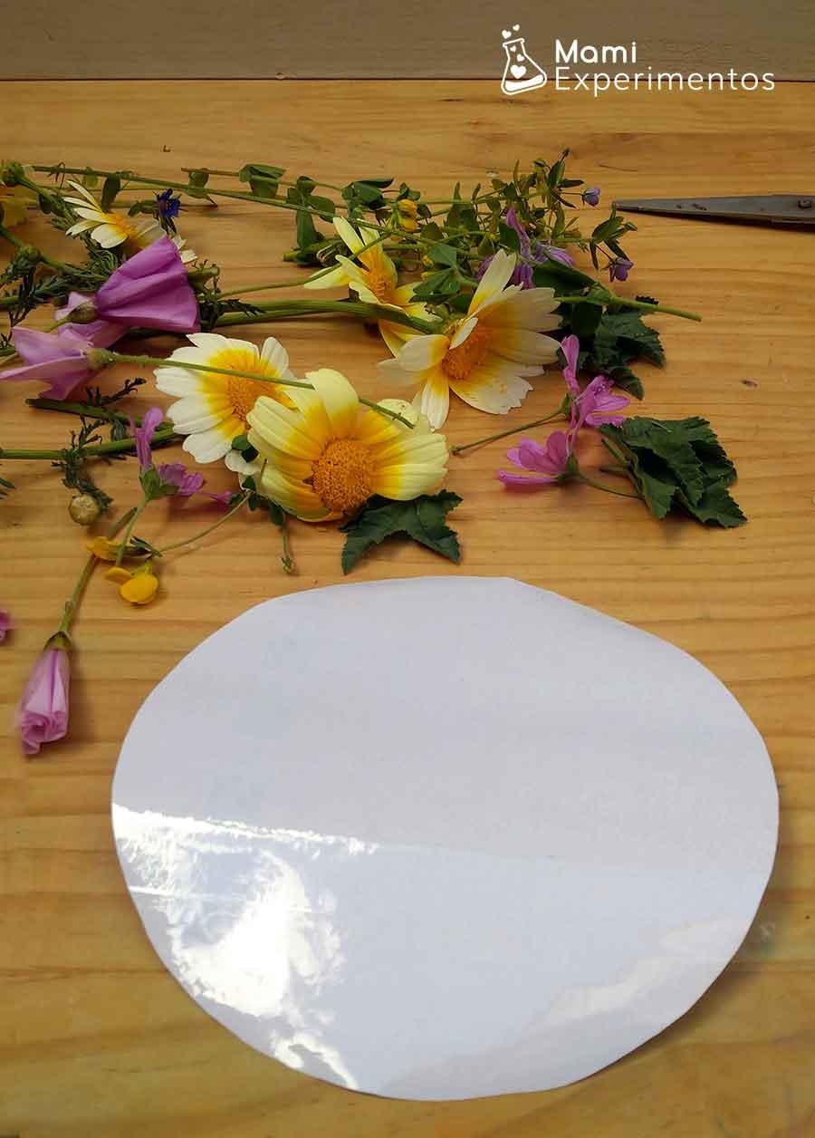 Papel transparente recortado para atrapasol de flores