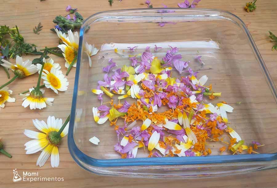 Pétalos de flores de colores para slime de primavera flower power