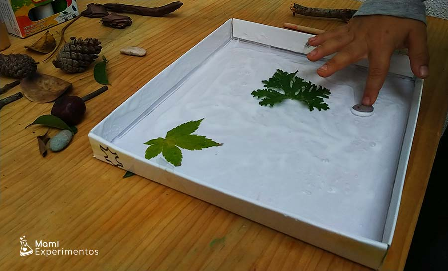 Piedras y hojas en arte de otoño en tapa de caja de zapatos