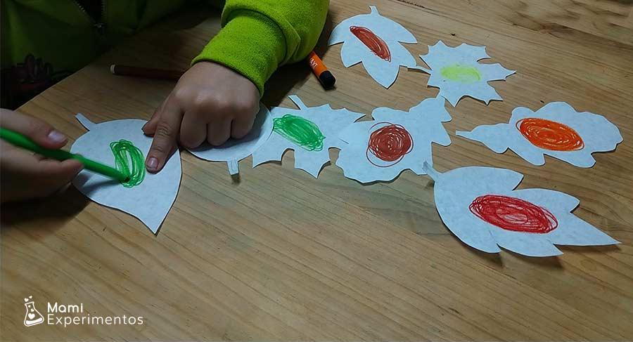 Pintando hojas de colores para experimento de absorción con filtros de café