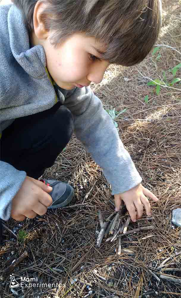 Recolectar palos y ramas para árbol de invierno artístico