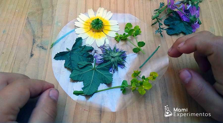 Seleccionando flores en adhesivo para atrapasol de flores