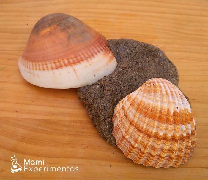 Slime de arena de playa y conchas marinas