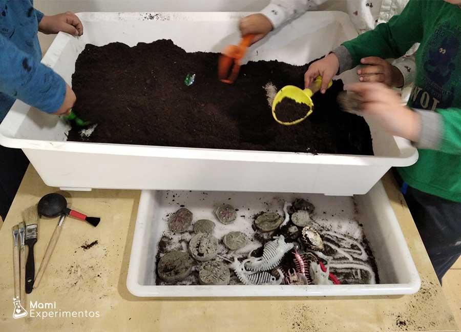 Taller de geología buscar fósiles