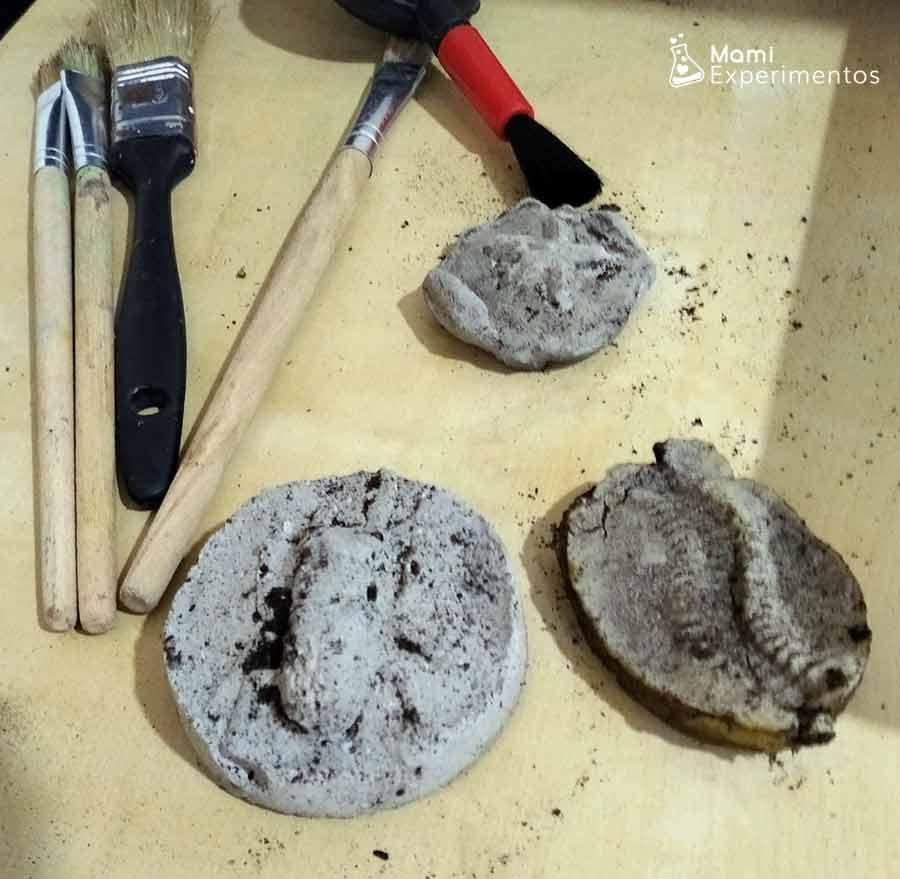 Taller de geología fósiles encontrados bajo tierra