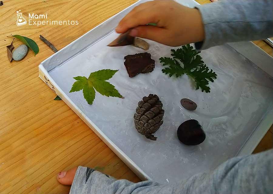 Tapa de cartón decorada con elementos de la naturaleza de otoño
