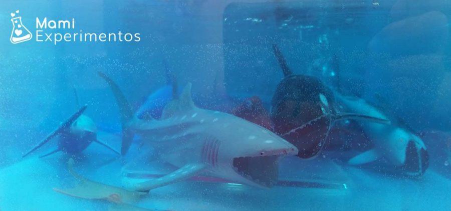 tiburón blanco en el mundo marino