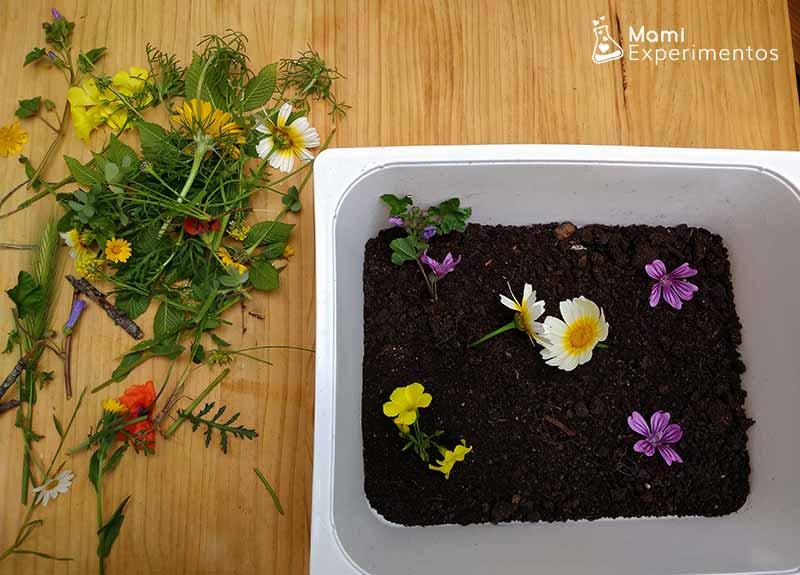 Tierra y flores en caja sensorial primavera